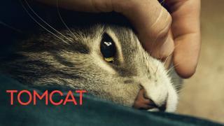 愛是一隻貓